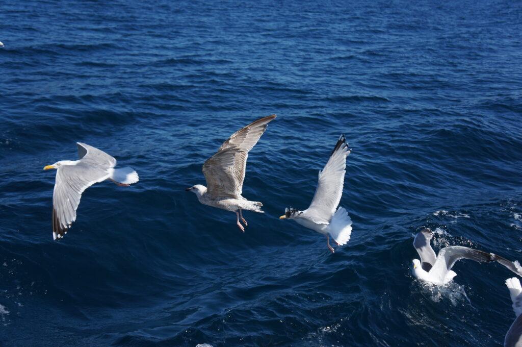 Seagulls Lining Up