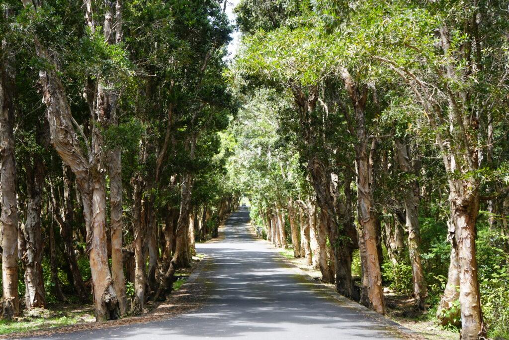 Trees Mauritius